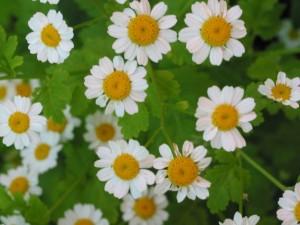 entspannung-Blumen