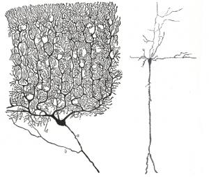 methoden-medikamente-Zwei_Verschiedene_Neurone